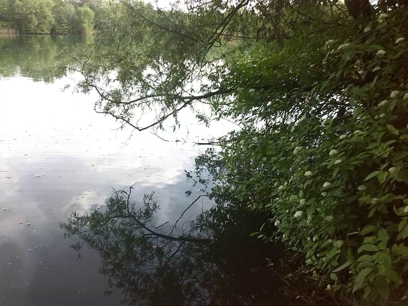 Überhängender Baum angeln