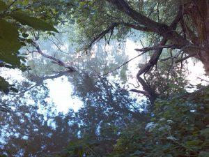 Hier sieht es schon erfolgsversprechender aus! Ein überhängender Baum der sogar in den Fluss wächst.