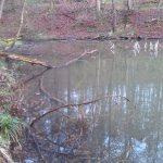 See mit Baum im Wasser
