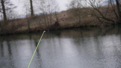 Spitze einer feederrute beim angeln