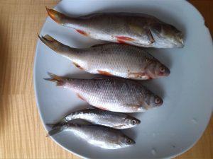 Hecht Köderfische auf Teller