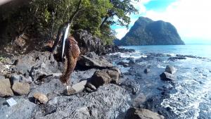 Lapu lapu auf Wobbler gefangen auf den Philippinen