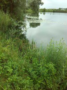 Seerosenfeld kleiner See