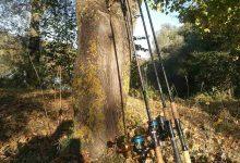 Montierte Spinnruten an Baum gelehnt